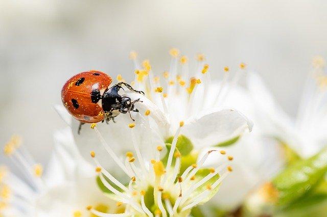 室内虫除けグッズおすすめ9選!夏の虫対策に効果的な方法を伝授!【ペット対応も!】