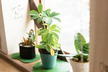 初心者でも育てやすい観葉植物おすすめ8選!ポイントもご紹介!